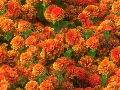 fondos web flores - ::